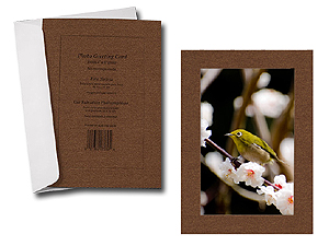 Metallic Lustre Simplicity Photo Insert Greeting Cards (10 Pack)