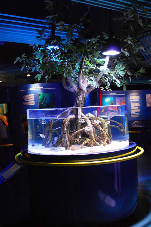 <p>The Veracruz Aquarium exhibits various marine species</p>