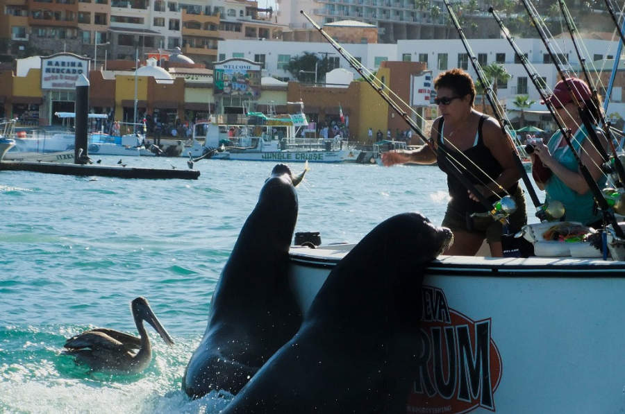 <p>Encounter with sea lions during a tour in Los Cabos Tourist Corridor</p>