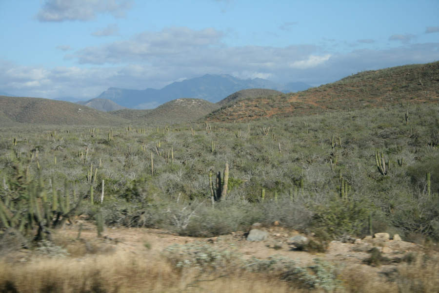 <p>Admire the desert in Los Cabos Tourist Corridor</p>