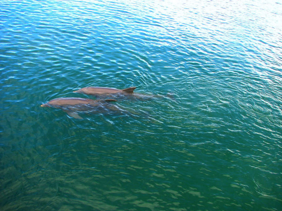 <p>If you are lucky you might see dolphins in the sea of Los Cabos Tourist Corridor</p>