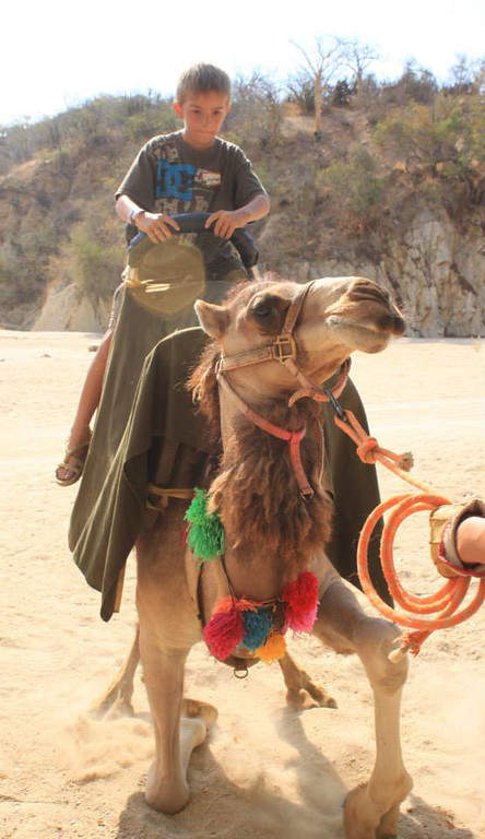 <p>Camel rides are available at Wild Canyon Park</p>