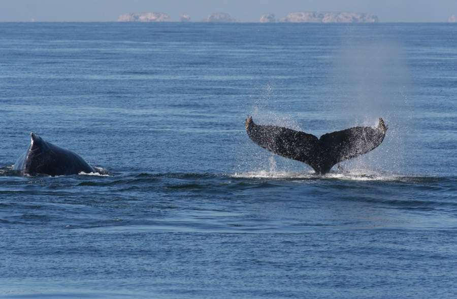 <p>Enjoy humpback whale watching in Puerto Vallarta</p>