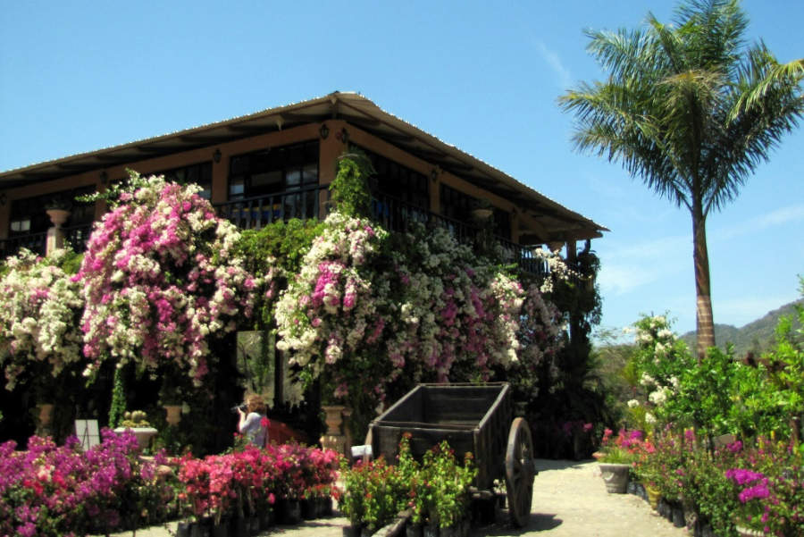 <p>Botanical Garden in Puerto Vallarta</p>