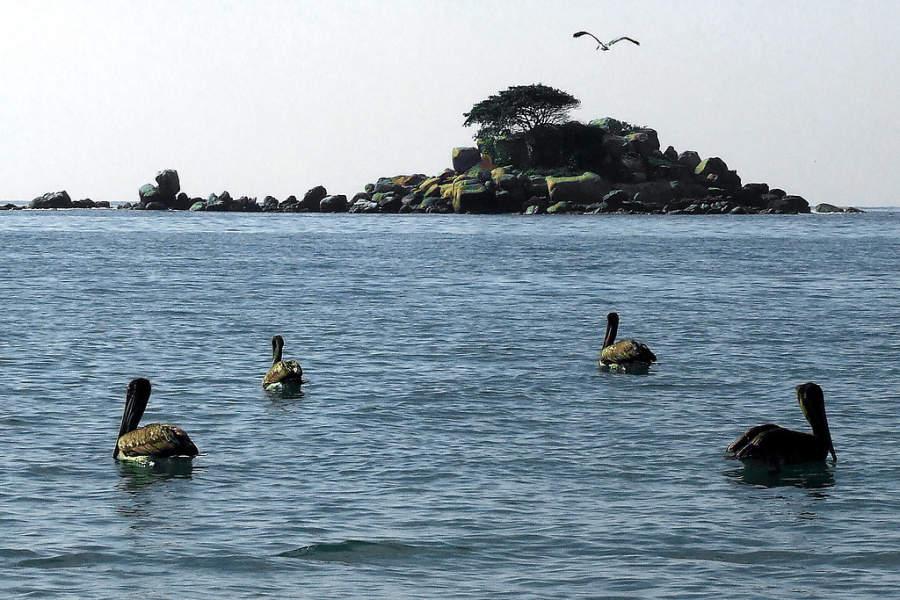 <p>Pelicans across El Morro Islet</p>
