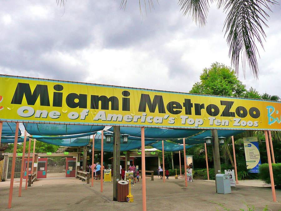 <p>El Zoológico de Miami alberga a más de 2.000 animales</p>