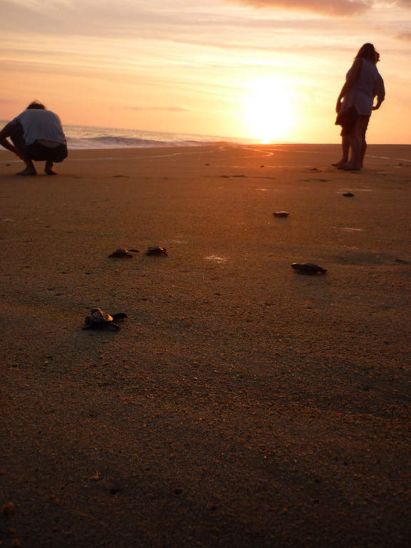 <p>The preservation of sea turtles is promoted in Puerto Escondido</p>