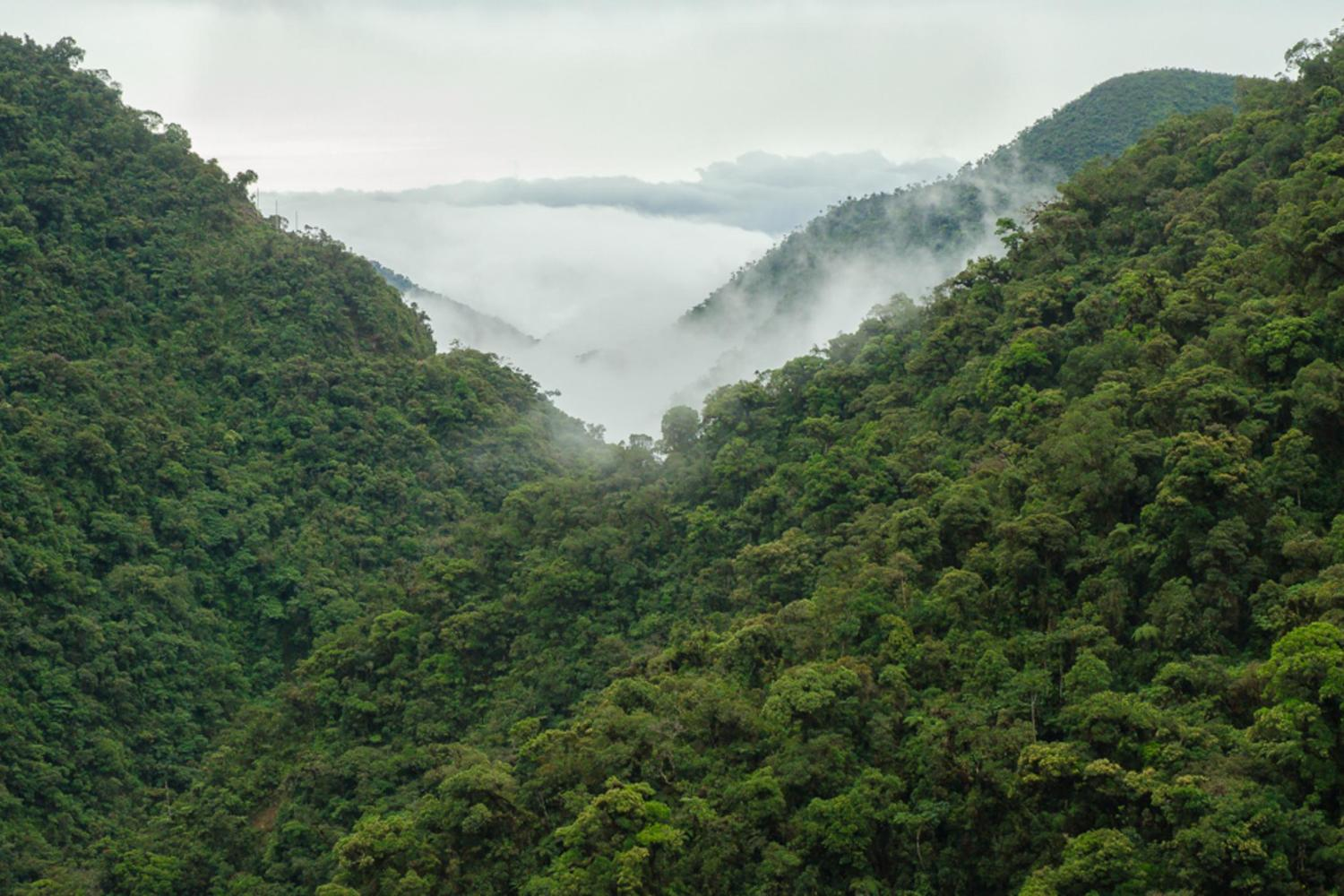 Dramatic views of the cloudforest in Manu biosphere reserve