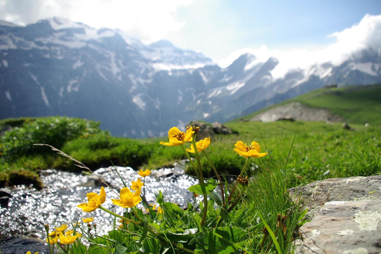 Spring flowers in the summit of Monte Perdido