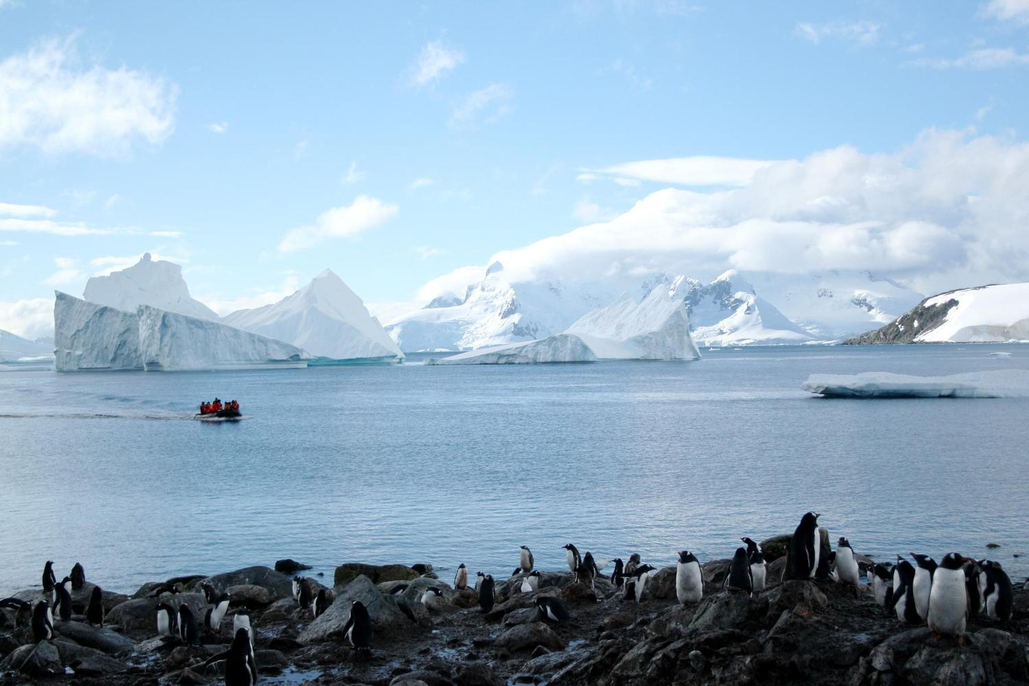 Zodiac approaching a penguin covered shoreline in Antarctica