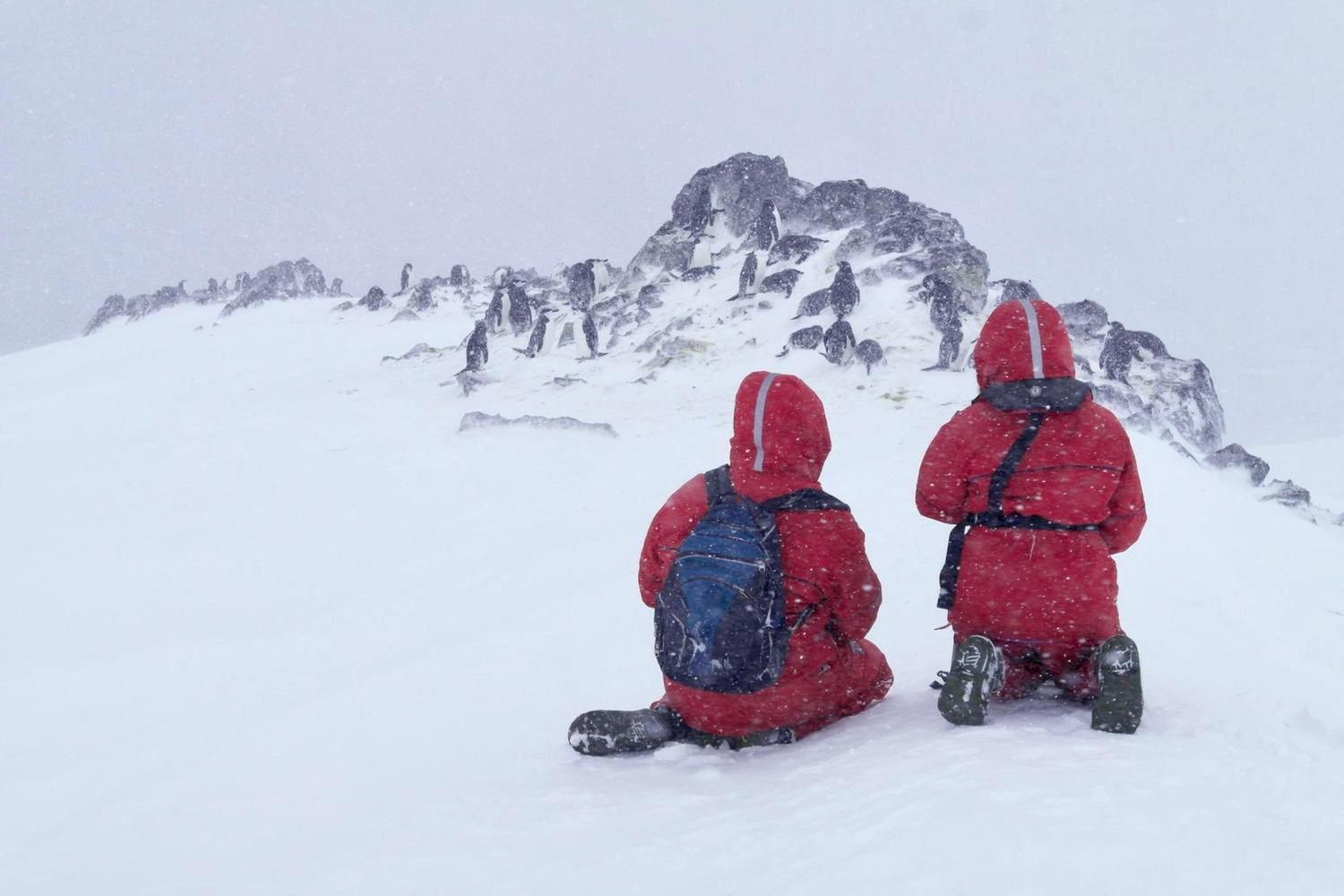 antarctica-orne-harbour-two-guests-chinstraps-snow