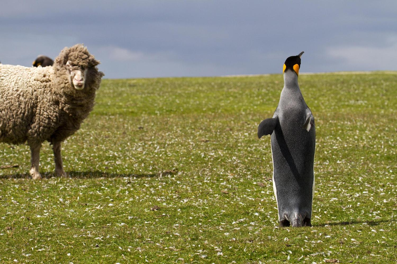 A strking friendship on the Falklands islands