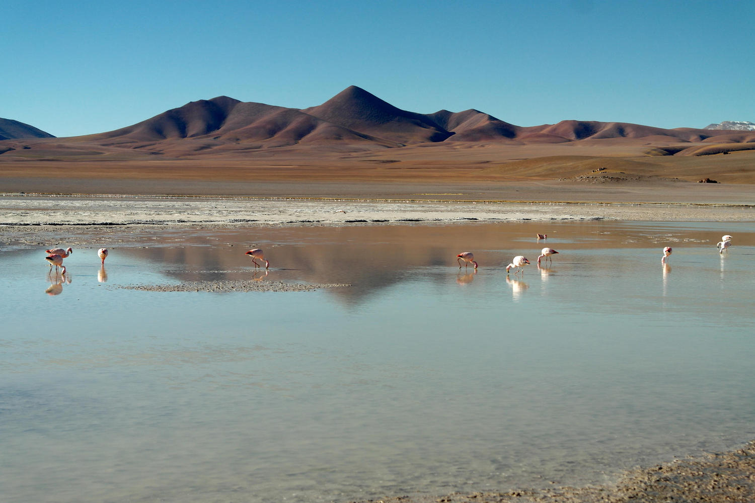 The flamingo filled lagoons of Argentina's puna