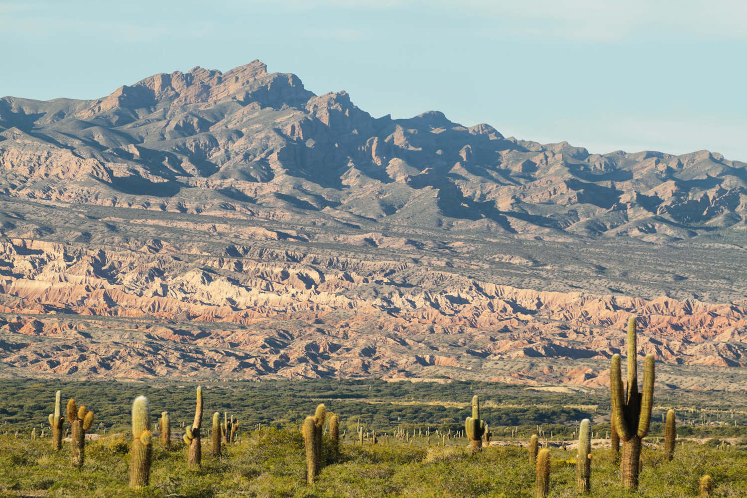 View of Los Cardones national park