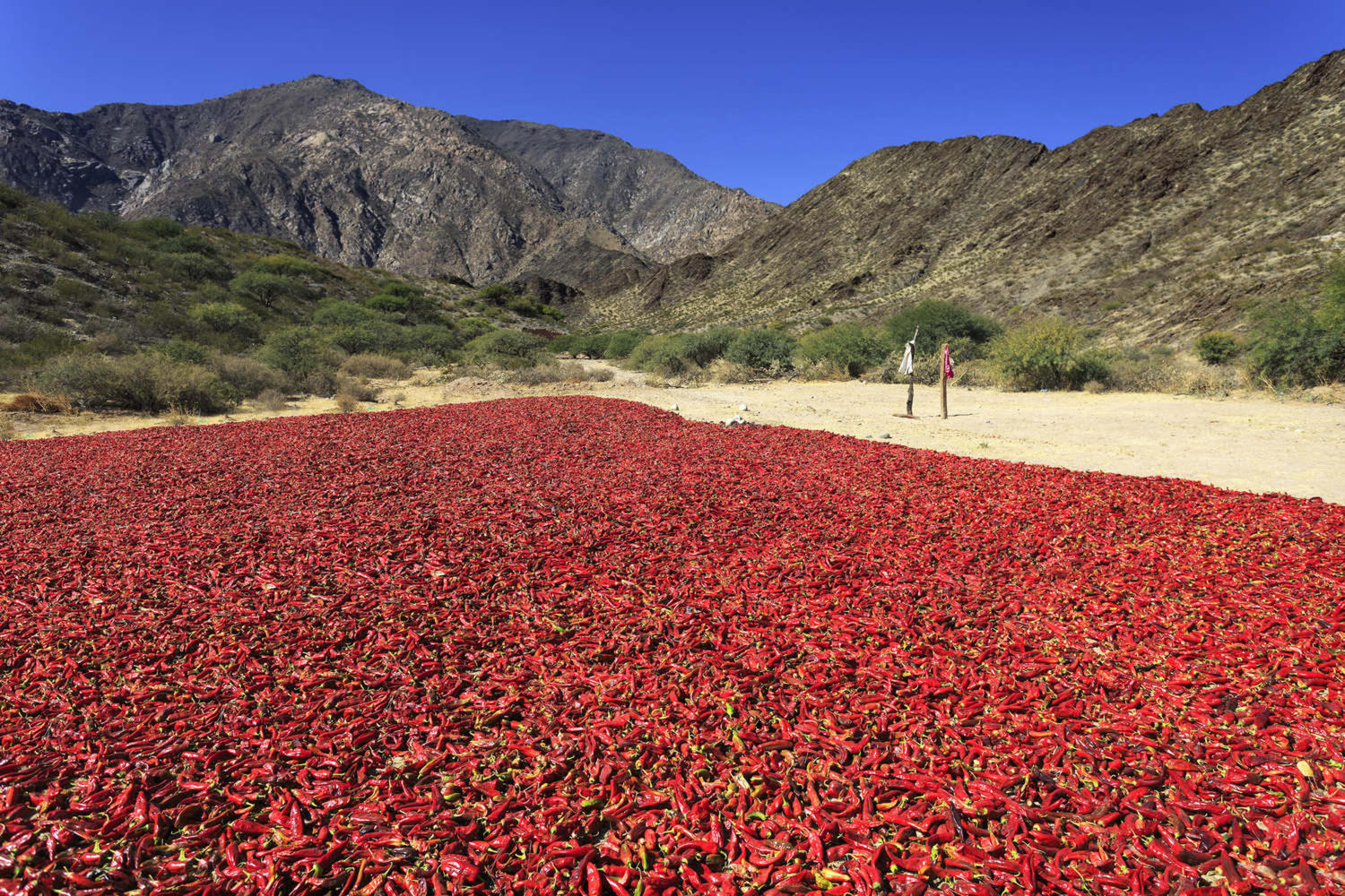Pepper drying in the mountain village Cachi