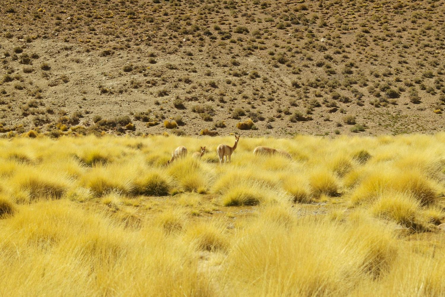 Beautiful contrasts of the high Altiplano in Argentina