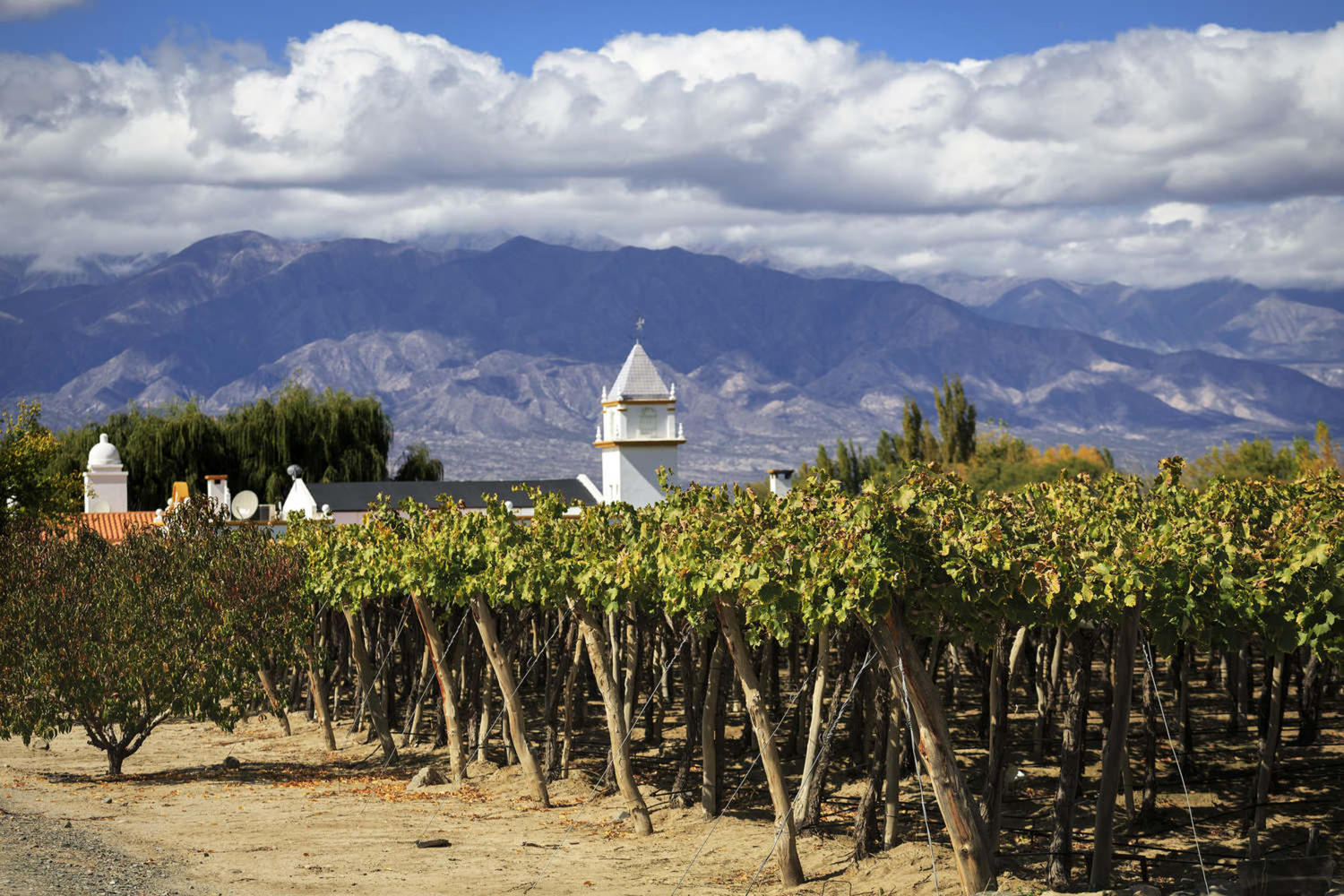 The vineyards of Cafayate