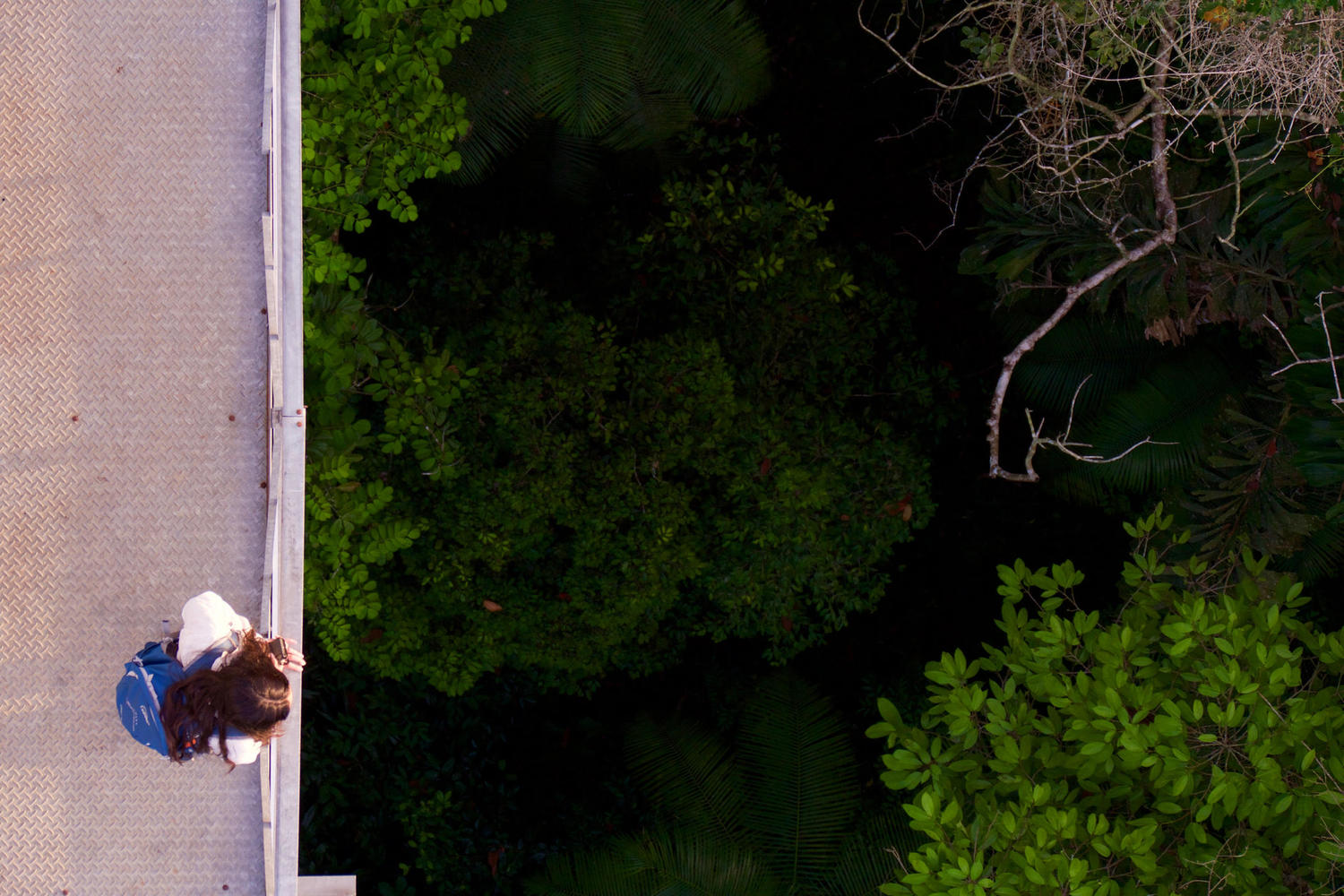 Looking down the observation tower of Cristalino Reserve, Amazon