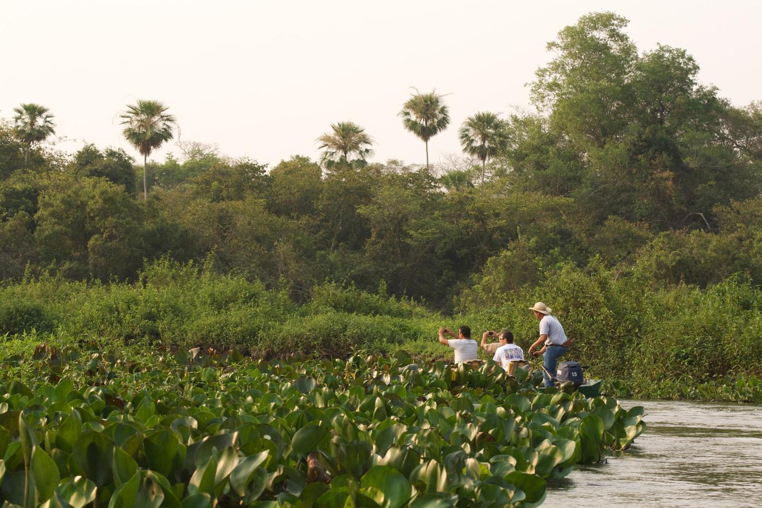 Exploring the waterways of Brazil's Pantanal