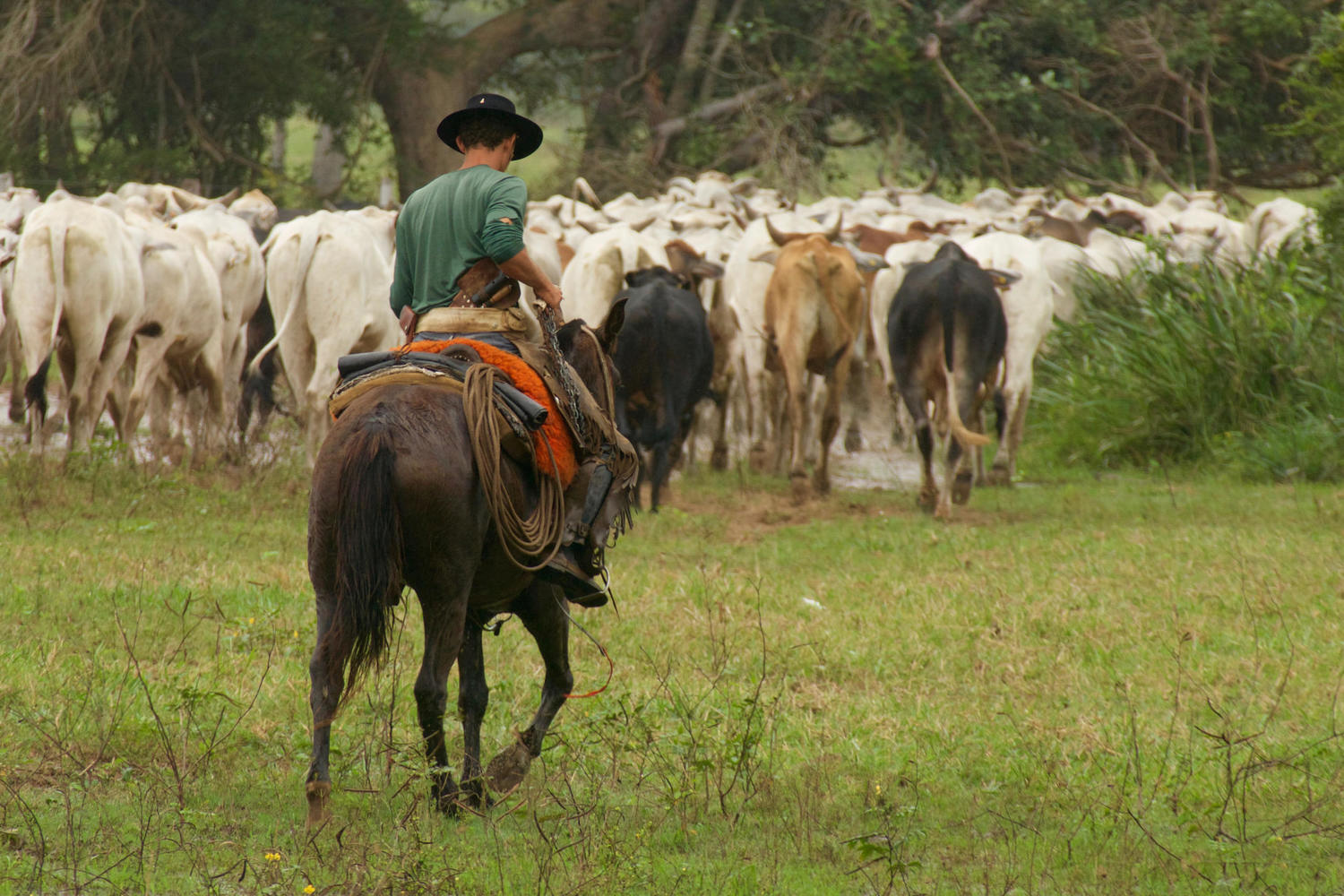 Cowboy on the way back to the ranch in the Pantanal