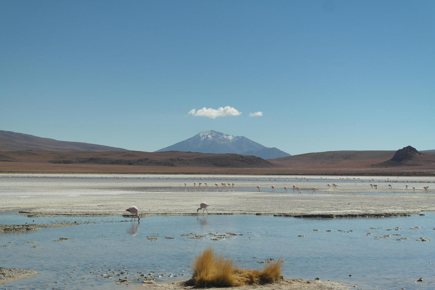 Incongruous flamingos are found throughout the near-empty altiplano of northern Chile.