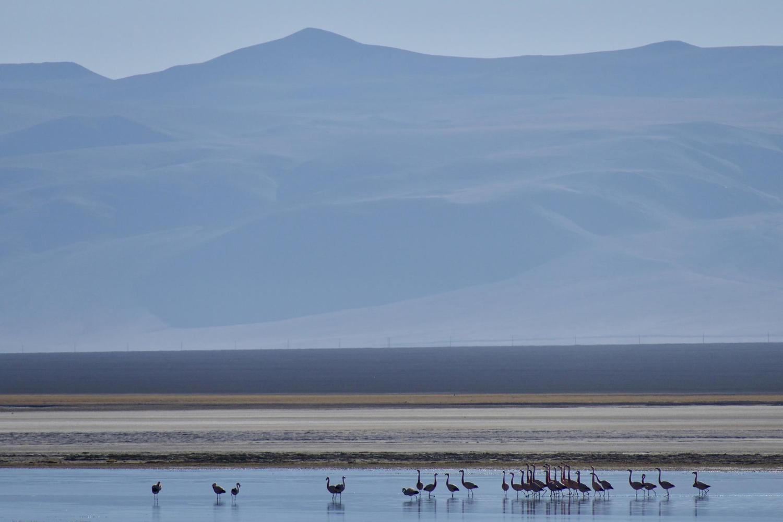 Flamingos at sunrise on Laguna Santa Rosa