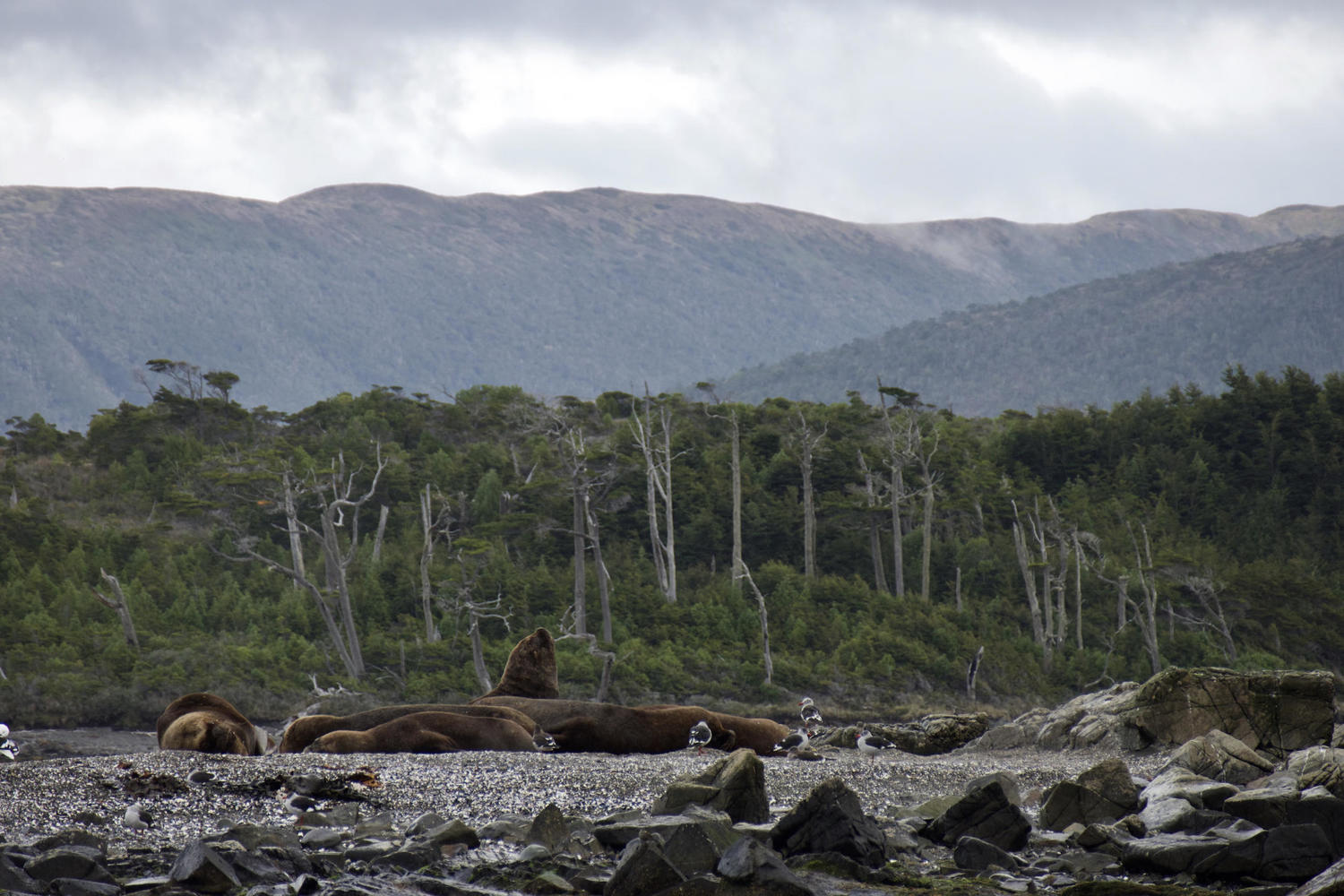 Sea lions on an island near Tucker Islet