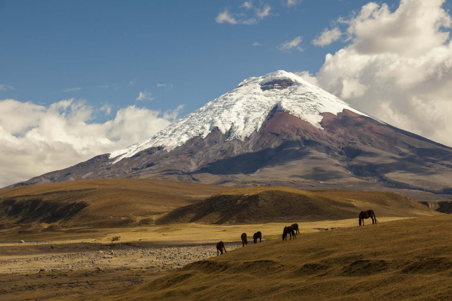 Lovely view of Cotopaxi volcano and wild horses
