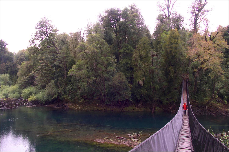 Crossing the hanging bridge in the Huilo Huilo Reserve