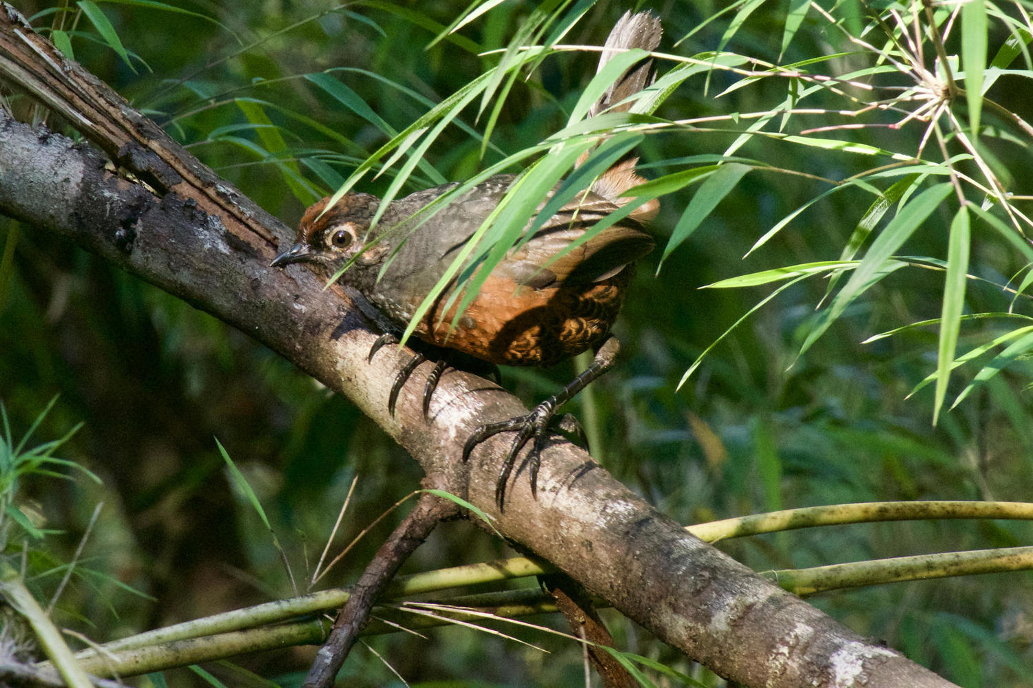 Birdlife in the Posada de Queulat forest