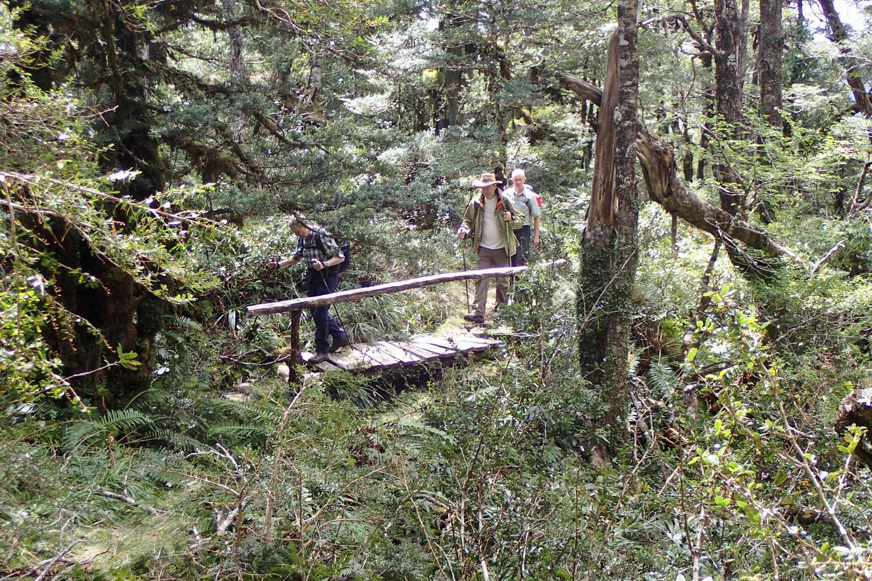 Puma Trail, Queulat National Park