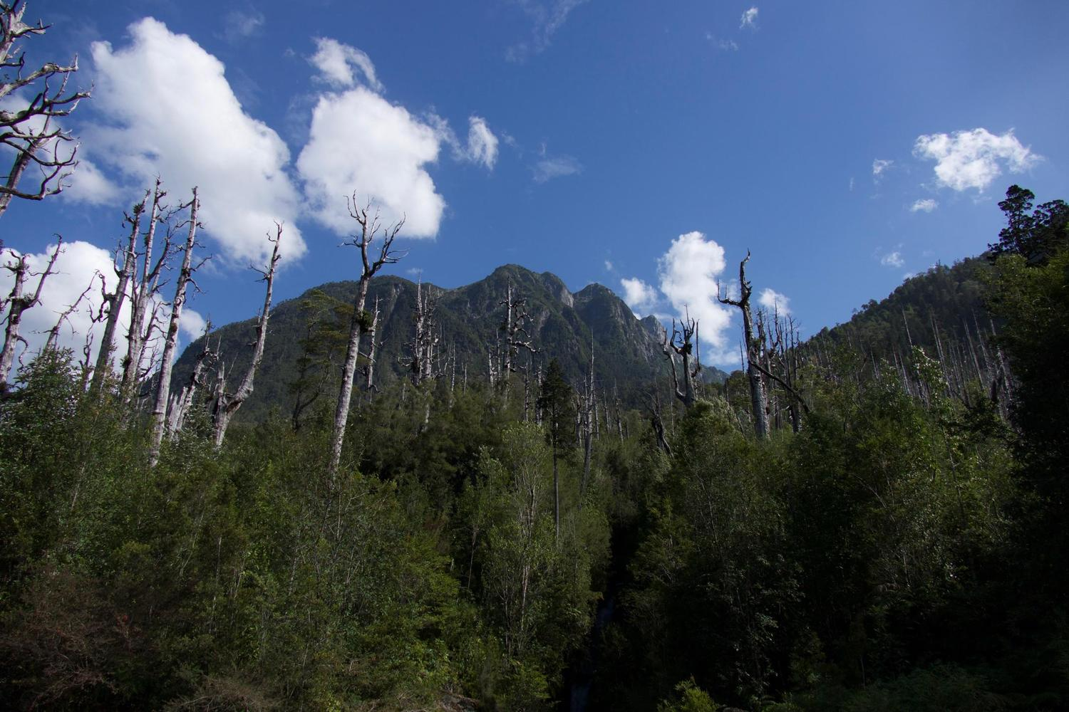 The Alerce forests of Pumalín Park