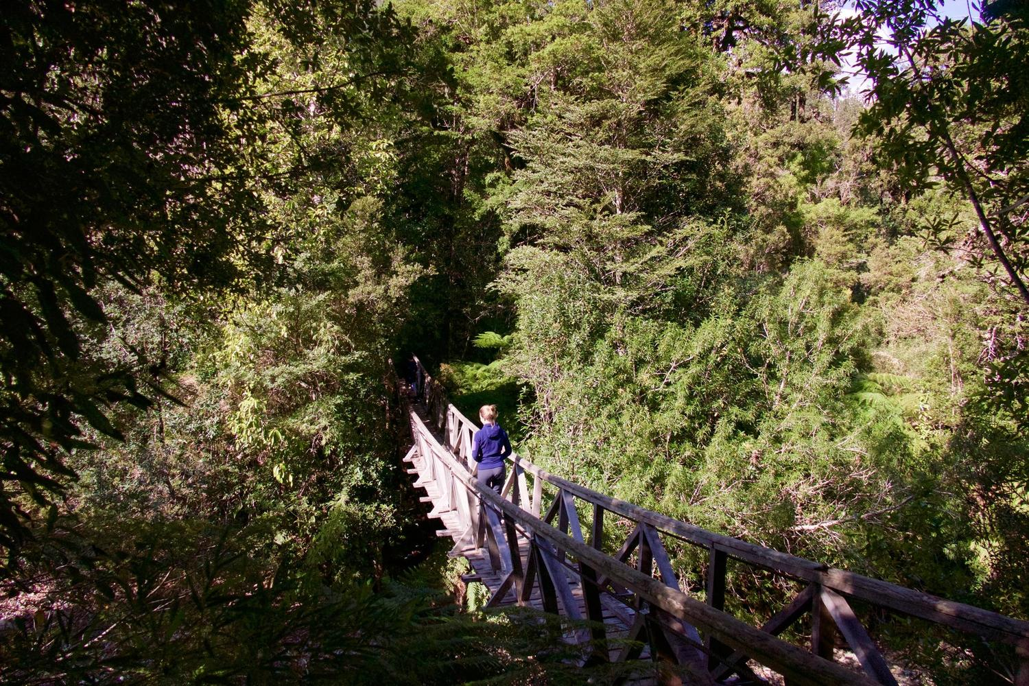 Walking in the Alerce forests of Pumalín