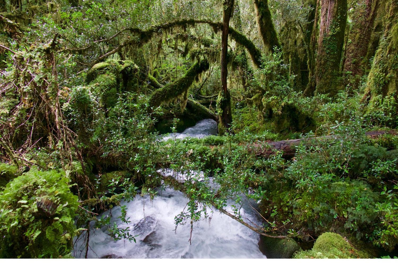 Lovely Bosque Encantado in Queulat National Park