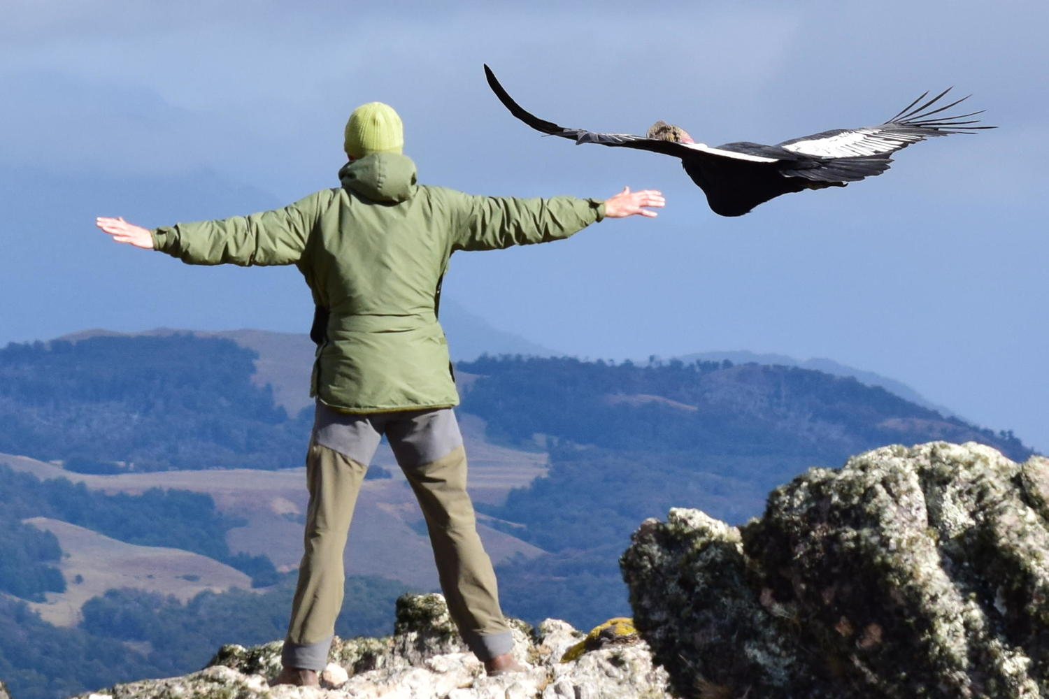 Condor rookery at Patagonian estancia on Carretera Austral