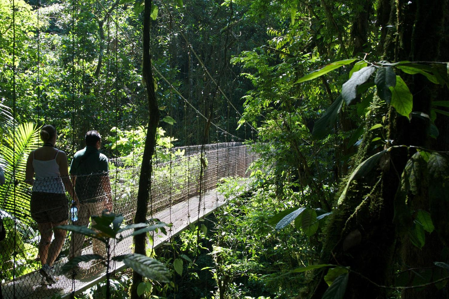 Walking across the hanging bridges through the forest canopy near Arenal volcano