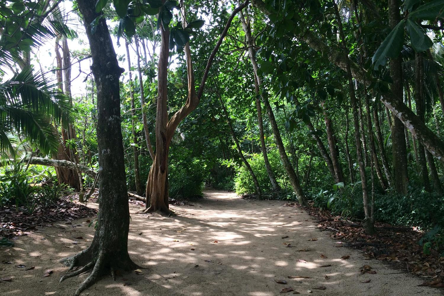 Walking the trails through Cahuita National Park