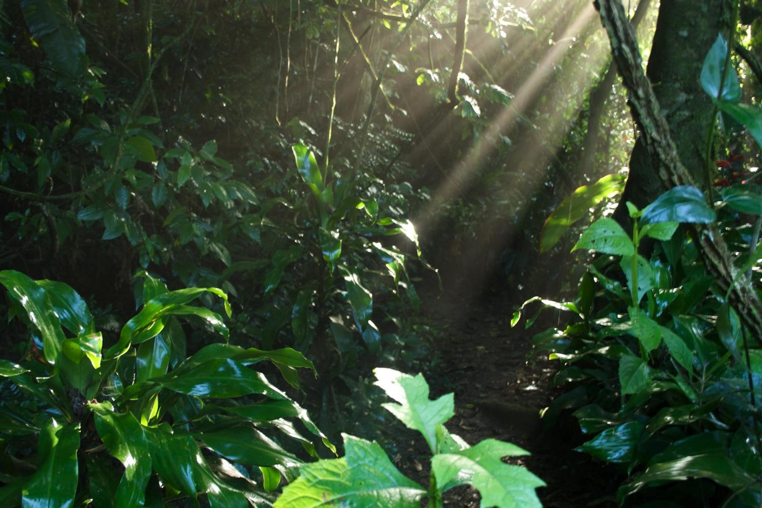 Morning sun streaming through the cloud forest