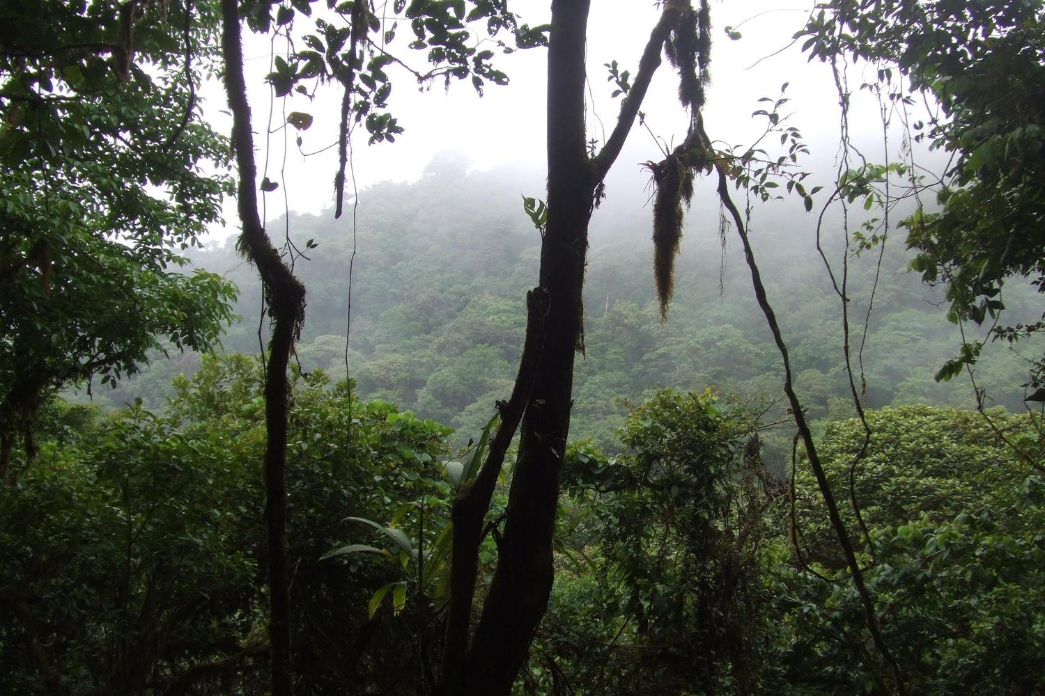 The damp canopy of the bird rich cloud forest of Costa Rica