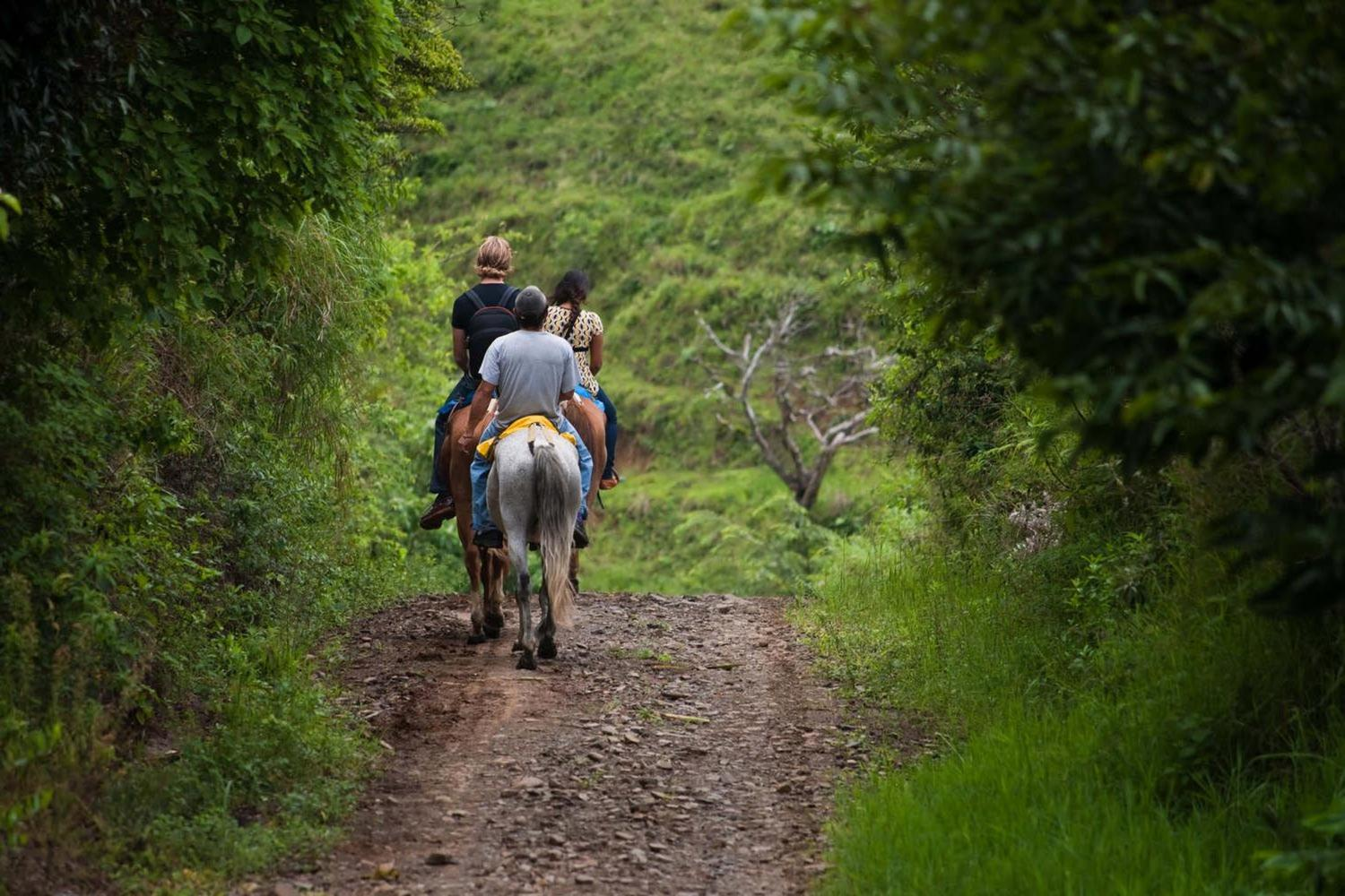Horse riding in the Monteverde cloud forest