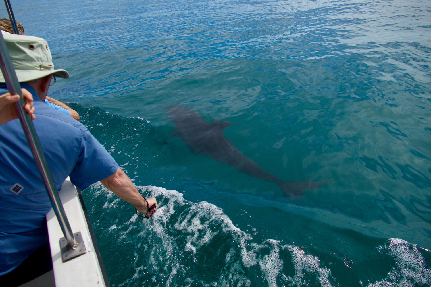It's not uncommon for dolphins to swim up beside boats on the Golfo Dulce, Osa Peninsula