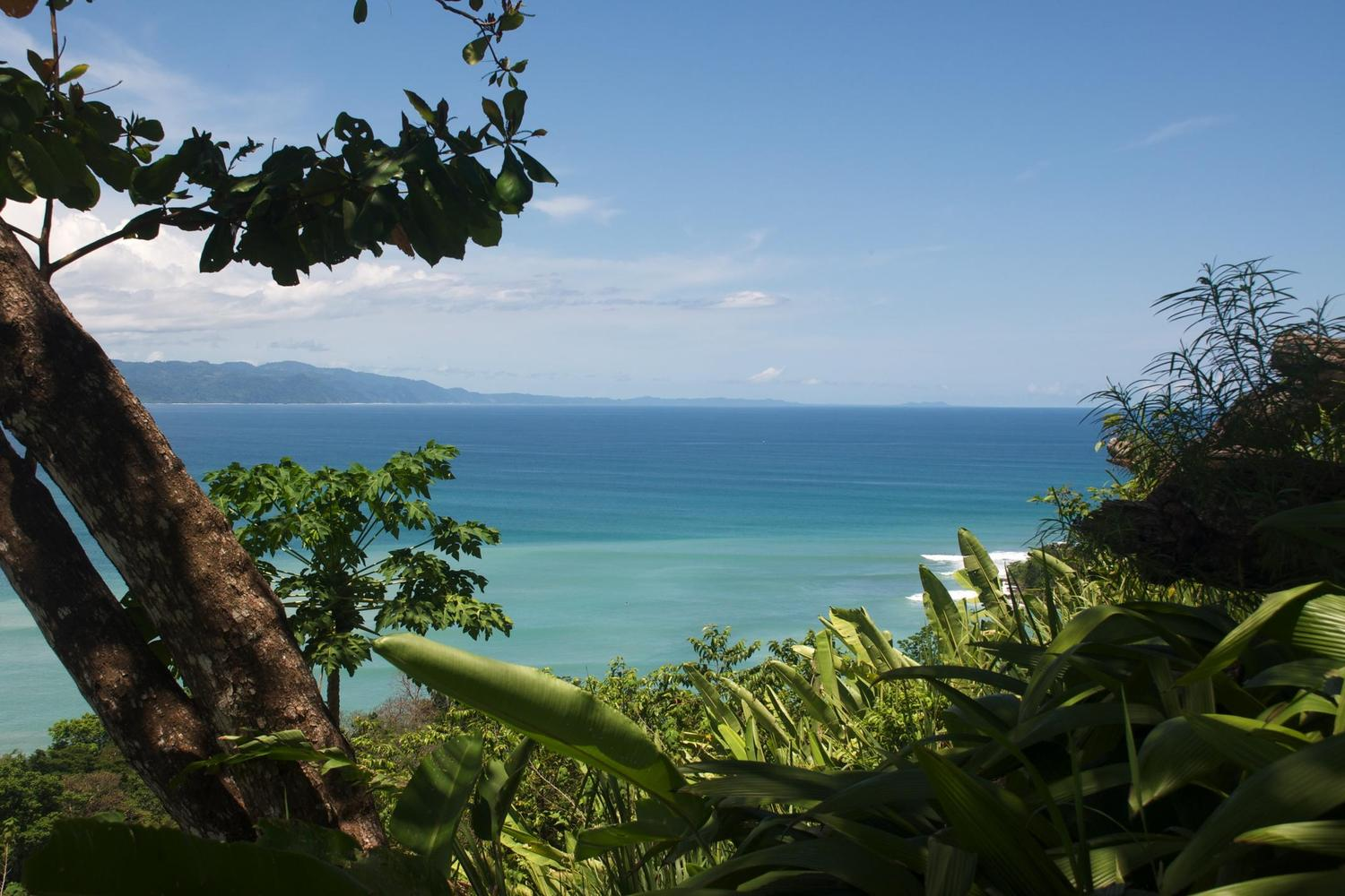 Lovely view out over the waters of the Golfo Dulce