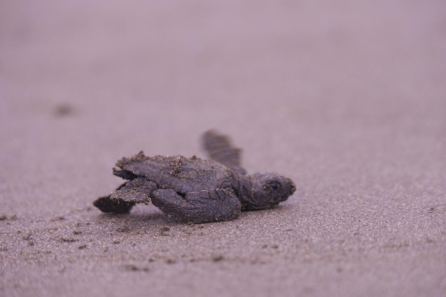 Baby turtle Rocky