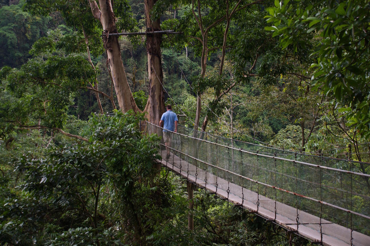 Walking across a canopy walkway at Pacuare Lodge