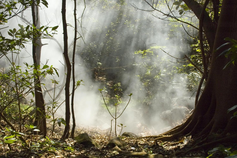 Fumerole in the forest of Rincon de la Vieja, Costa Rica