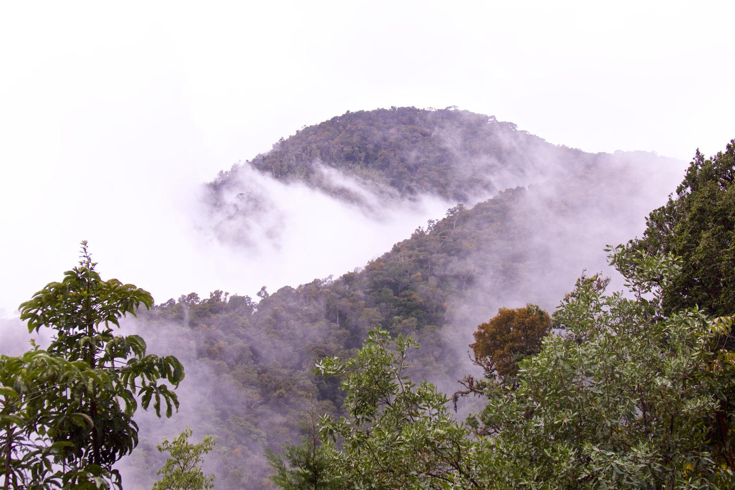 Mists drift across mountains and trees in San Gerardo