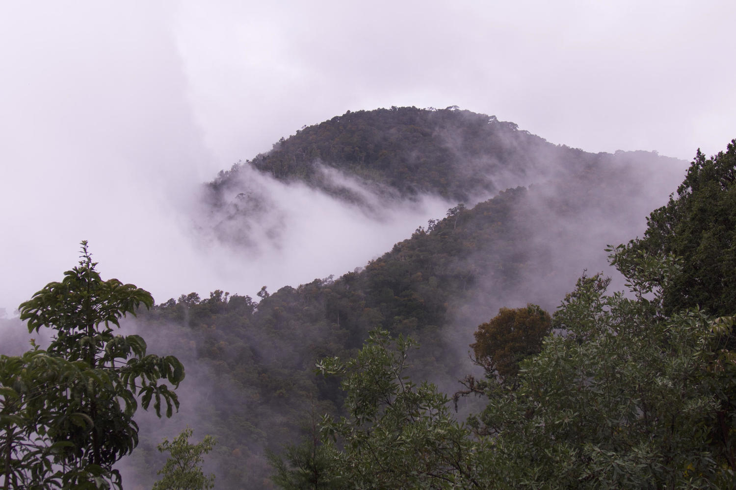 Drifting cloud over the forests of San Gerardo de Dota
