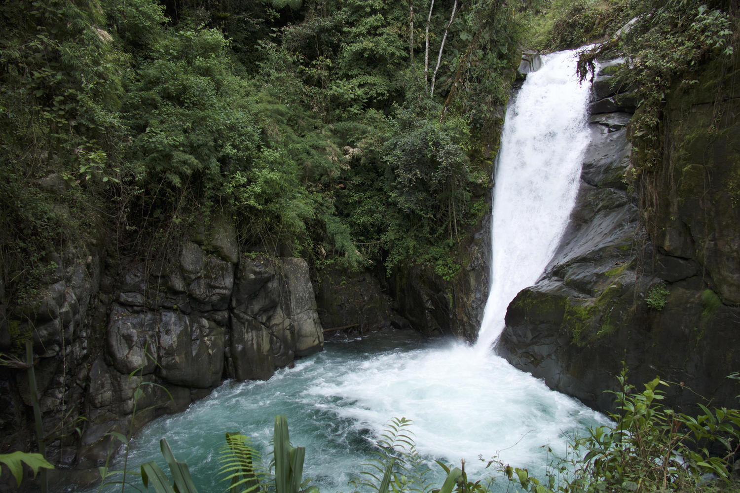 Beautiful waterfall in the Cloudbridge Reserve near Cerro Chirripo, Rivas