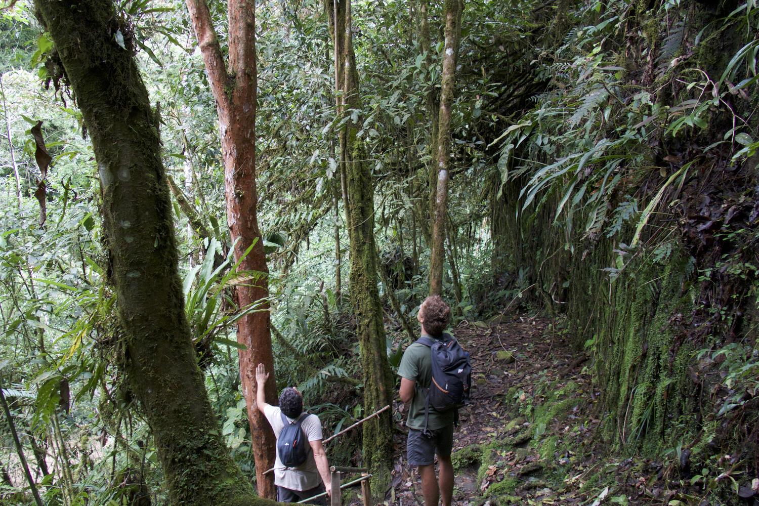 Exploring the cloudforest in the Cloudbridge Reserve