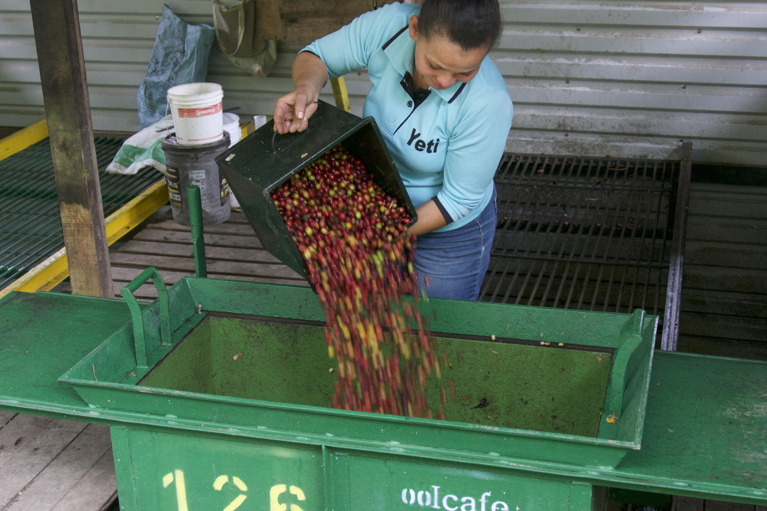Emptrying the 'cajuela' of beans in the recibidor